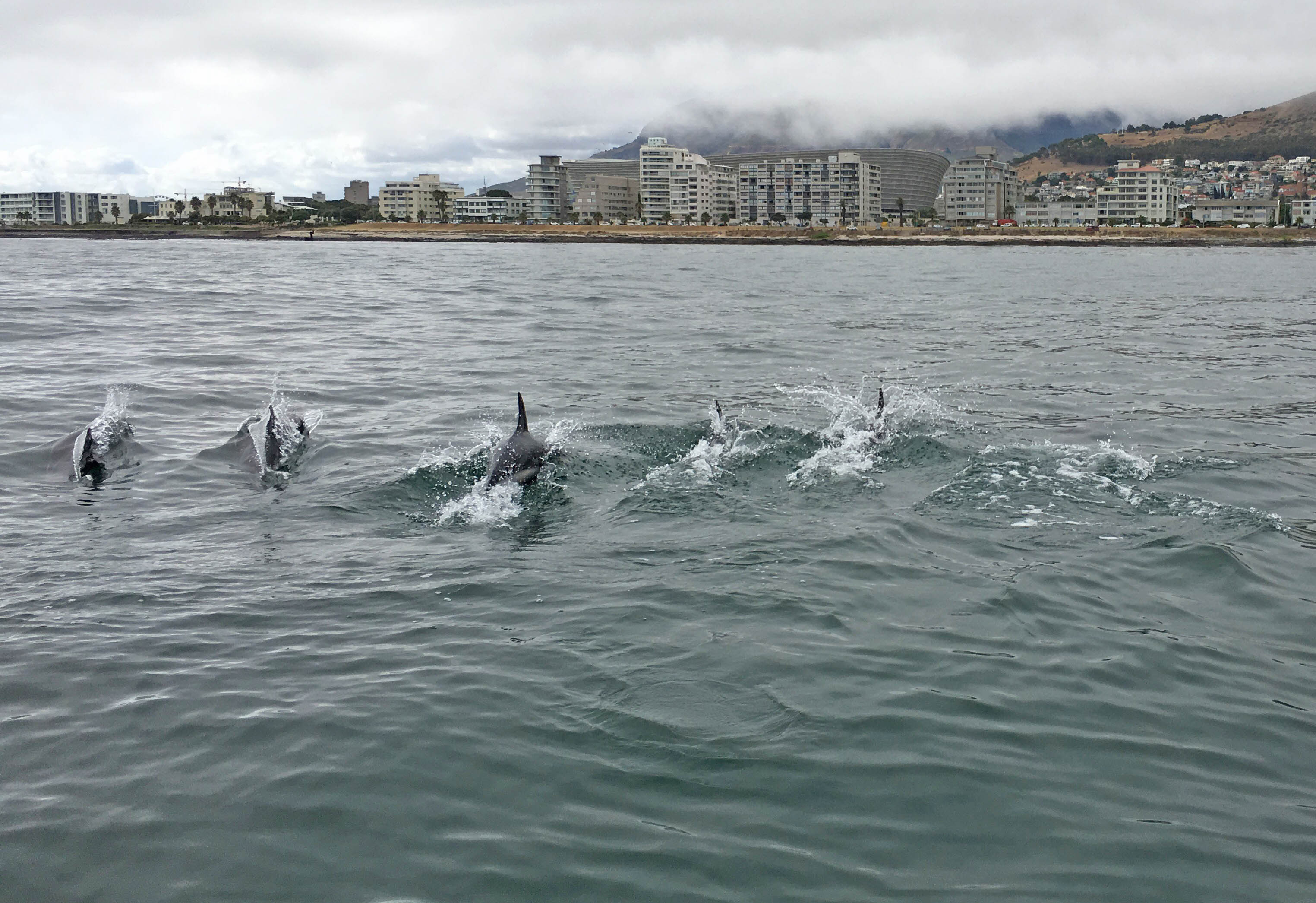 Dolphins joined the rescue boat at one point. Picture Robyn Silverstone/NSRI