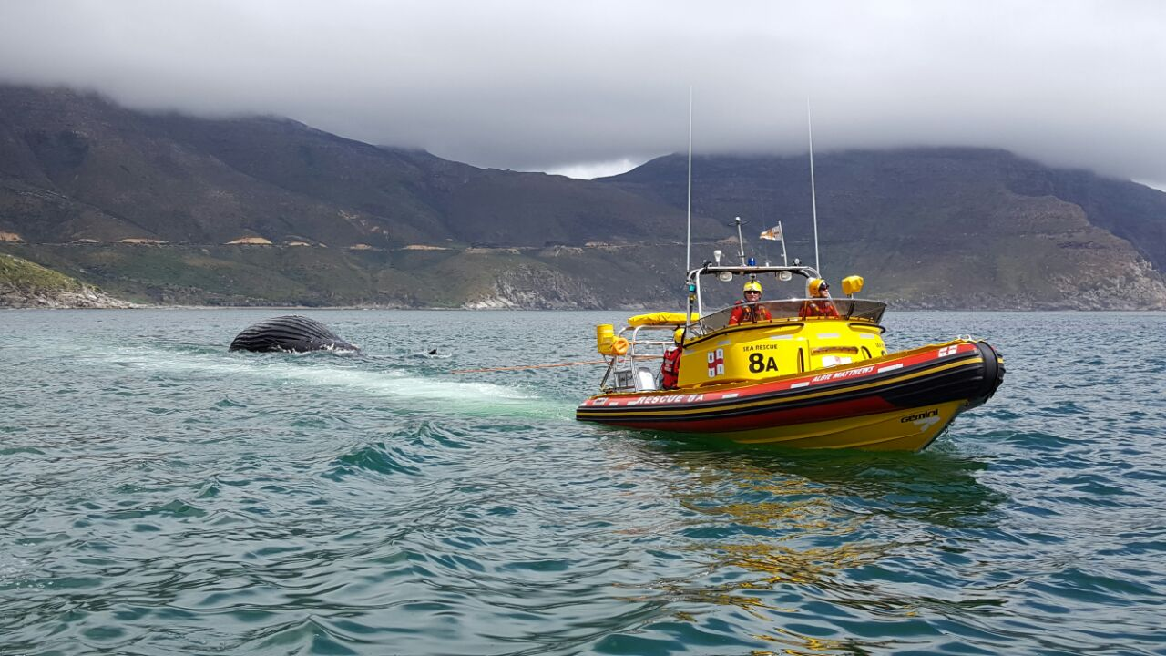 Photograph by NSRI Hout Bay of the whale carcass being towed.