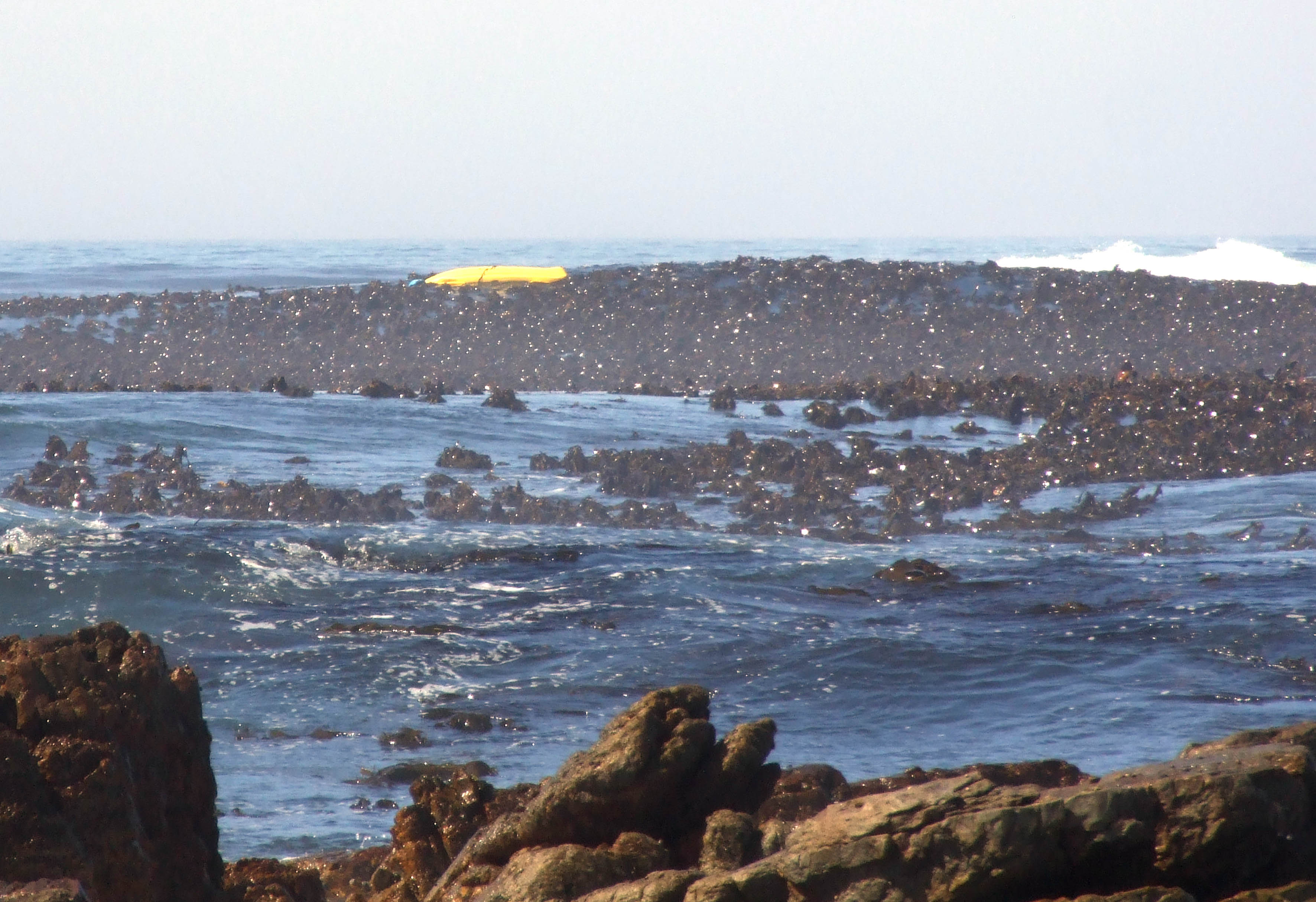 The kayak in the kelp. Picture Deon Langenhoven/NSRI