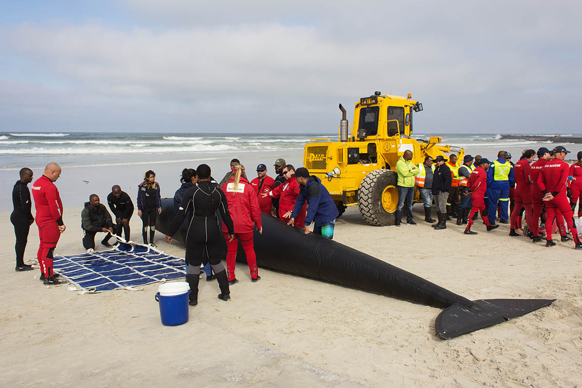 South African Stranding Network: On Saturday 28 May 2016, 90 local members of the South African Stranding Network (SASN) attended a three hour training session that was jointly presented by the Department of Environmental Affairs (DEA) Branch Oceans and Coasts and the City of Cape Town (COCT) at the NSRI Strandfontein beach rescue centre. Picture by Sylvia Kirkman, Natural Shades Photography