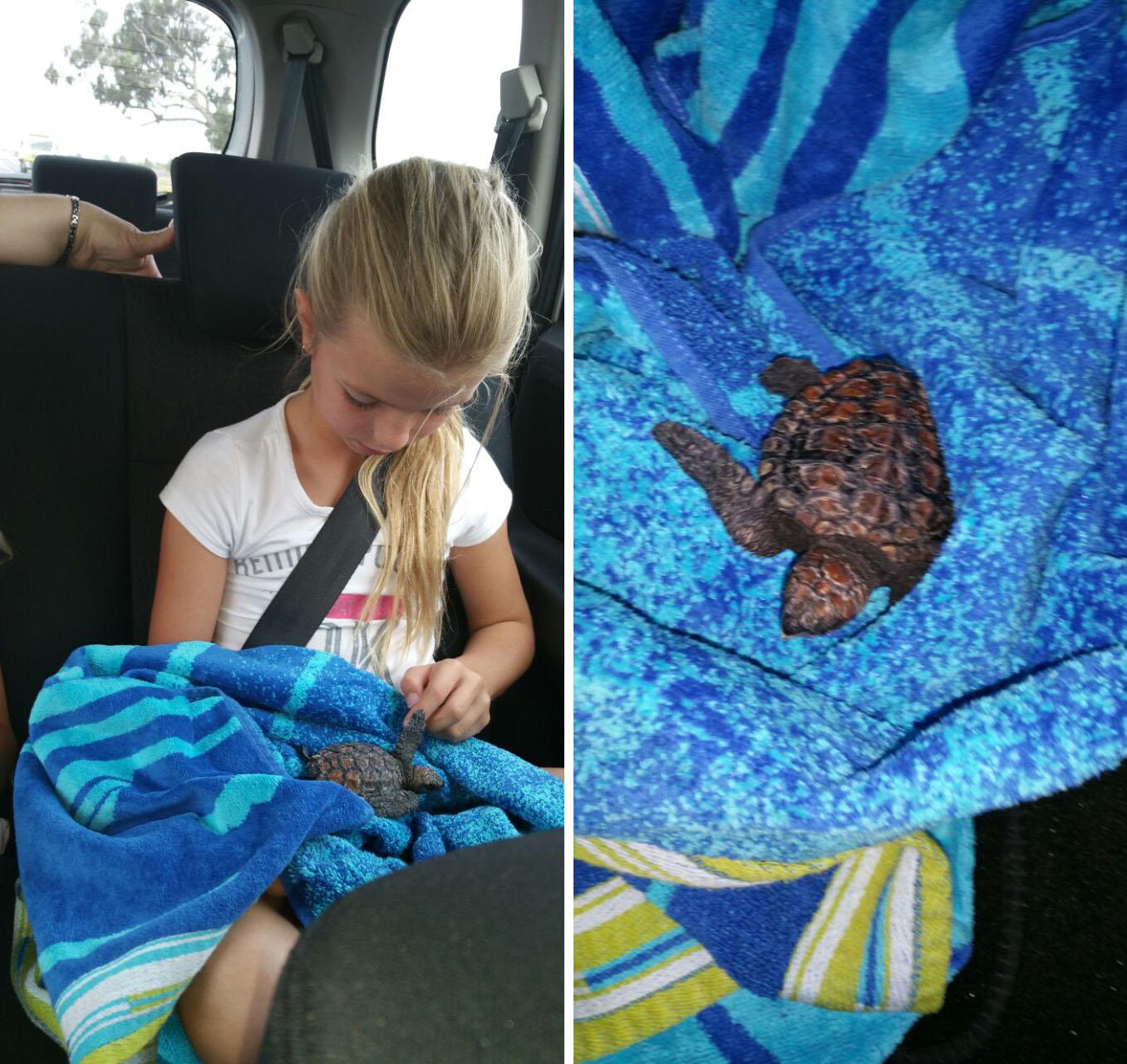 Rosie the Turtle