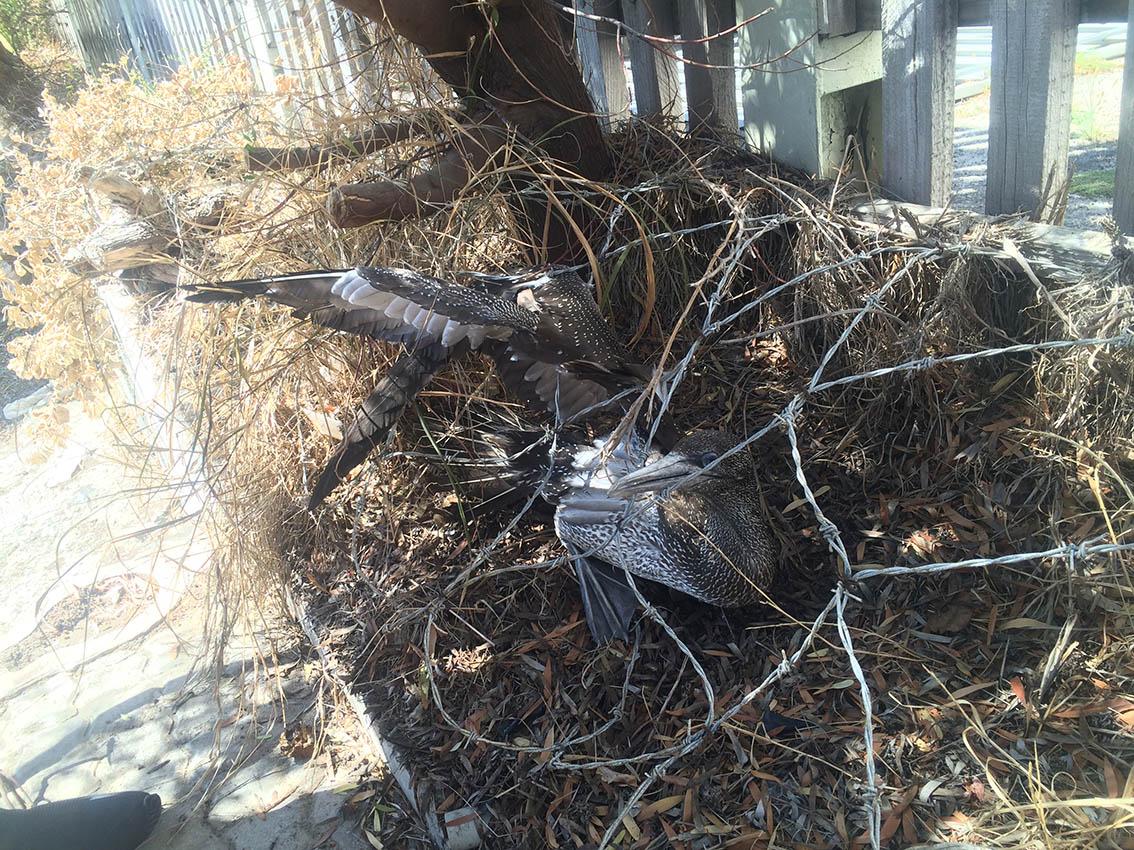 Simons Town bird rescue