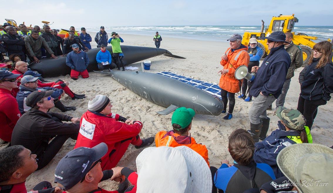 Whalestrand training_Rob Tarr