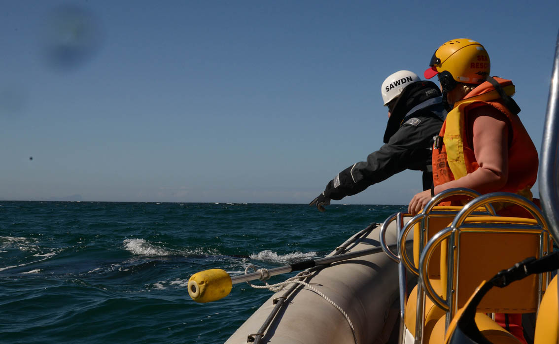 At 08h20 (Saturday, 15th March, 2014) members of the SA Whale Disentanglement Network (SAWDN) released a juvenile Southern Right Whale off St James Beach on the False Bay Coast, Cape Town. Picture by Dave Hurwitz/SAWDN