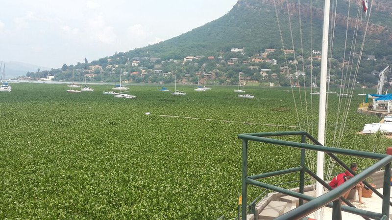 Source: Jacaranda FM, shows the Hyacinth growing on the Hartbeespoort Dam