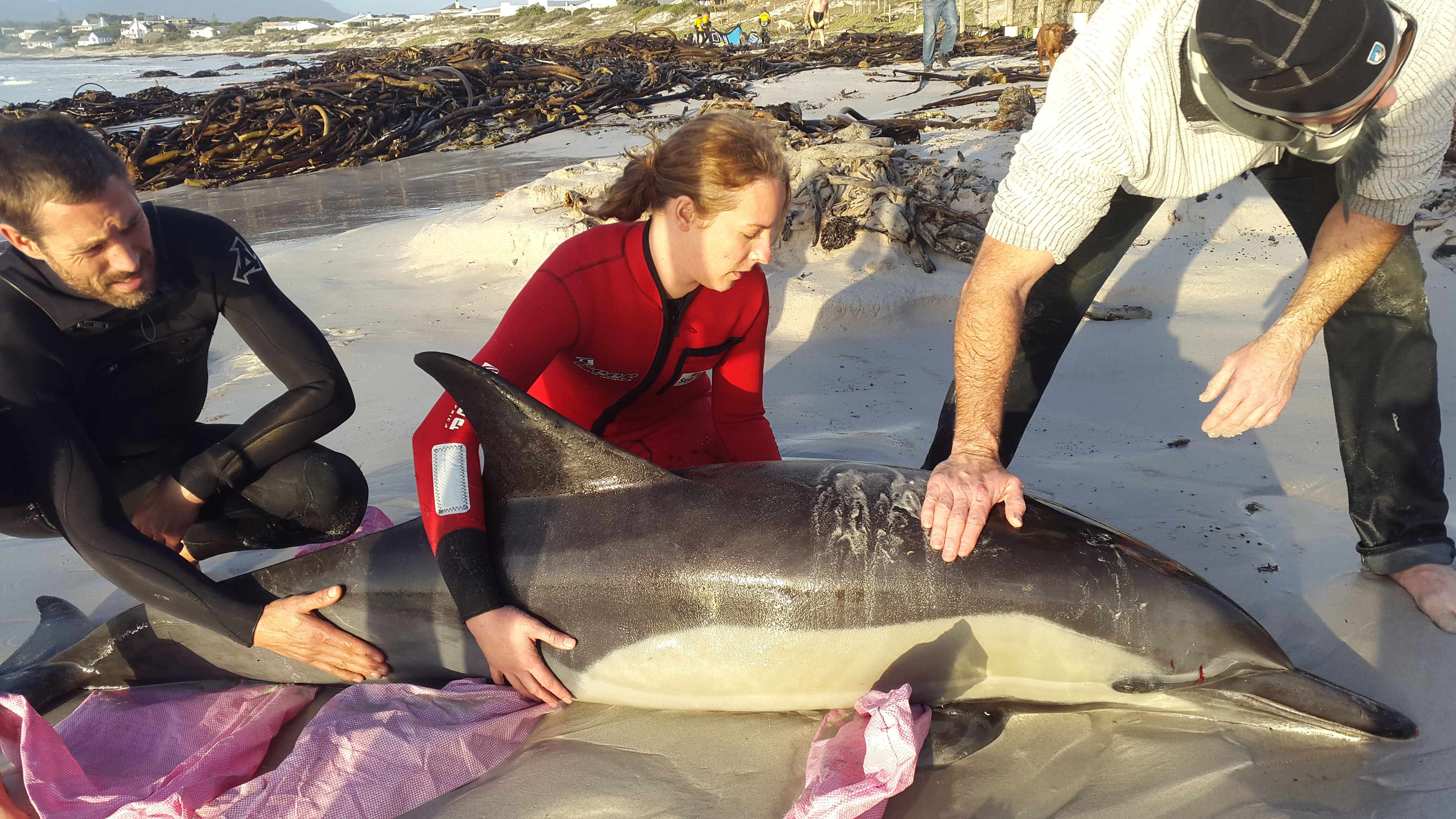 Kelly-Ann Irving of NSRI Kommetjie and bystanders on the scene at Long Beach, Kommetjie where this injured Common dolphin died. Picture Ian Klopper/NSRI.